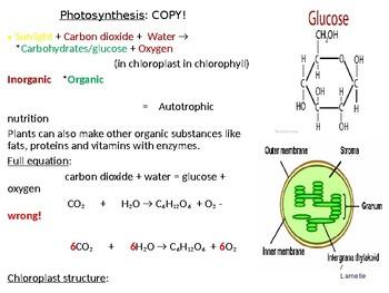 IGCSE Year 10.7 Photosynthesis