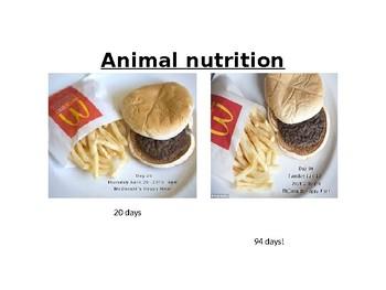 IGCSE Year 10.9 Animal Nutrition