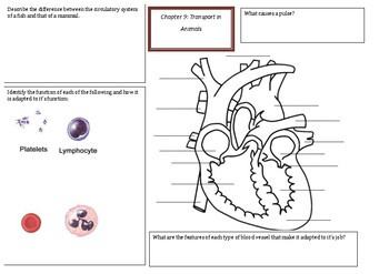 IGCSE biology revision mats chapter 7 to 11