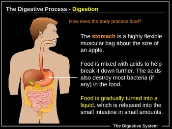 ILLUSTRATED Digestive System!  MUST SEE!
