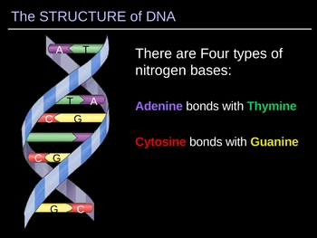 ILLUSTRATED Look at DNA!