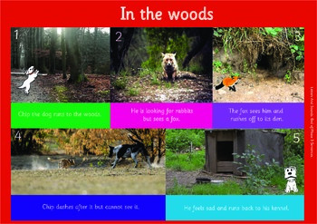 IN THE WOODS: A3 Phonics Poster and  Matching Board. End of Phase 3  Sentences.