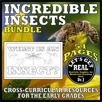 INCREDIBLE INSECTS Bundle (from the What Is an Insect? science series)