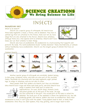 INSECT CLASS