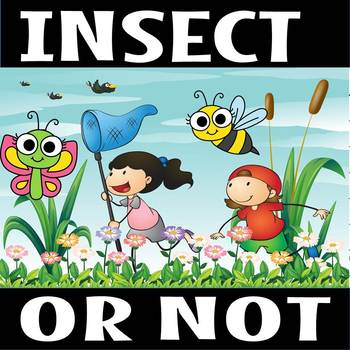 INSECT OR NOT