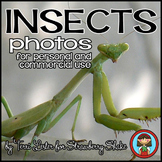 photos photographs INSECTS! Science and Nature for Persona