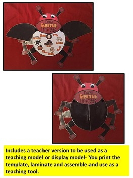 BEETLE LIFE CYCLE ART ACTIVITY-insect life cycle art