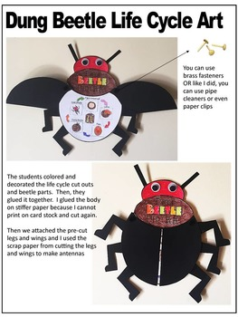BEETLE LIFE CYCLE ART ACTIVITY-insect life cycle art by ...