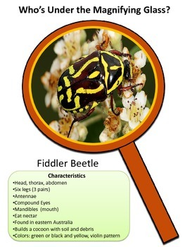 INSECT FACTS and More