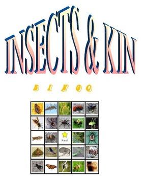 INSECTS & KIN Bingo