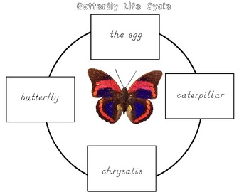 INSECTS Math and Literacy Extension Activities