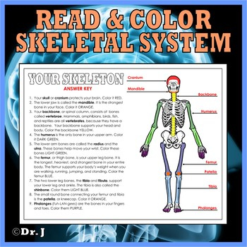 INSIDE THE HUMAN BODY Activity Pack