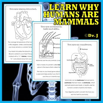 INSIDE THE HUMAN BODY Book and Activity Bundle