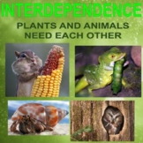 INTERDEPENDENCE - Plants and Animals Need Each Other
