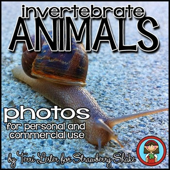 Photos Photographs INVERTEBRATES!  Animals Personal and Commercial Use