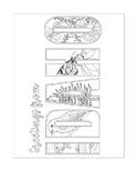 Idaho State Symbols Post Card