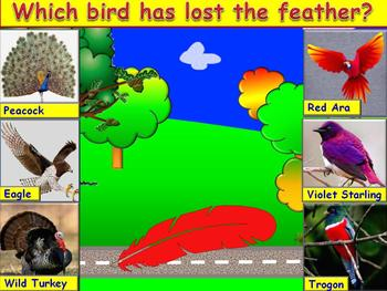 Identify Birds by their Feathers PowerPoint