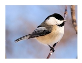 Identify The Bird - Game