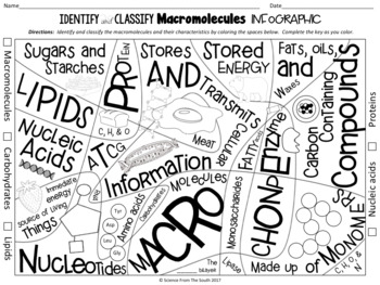 Identify and Classify Macromolecules Infographic for Notes Review or Assessment