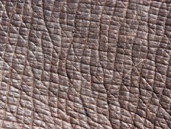 Identify which animal each of the skin patterns