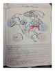 Identifying Air Mass Diagram: Interactive Science Notebooks