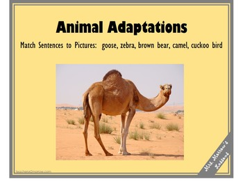 Identifying Animal Adaptations