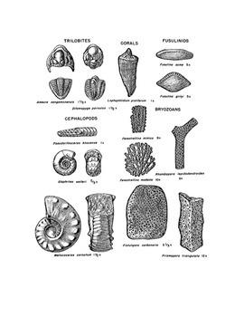 Identifying Fossils