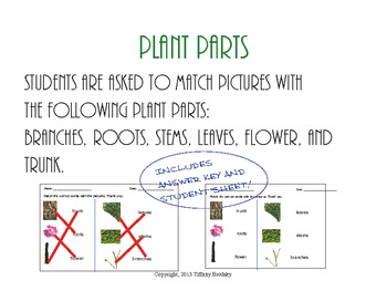 Identifying Plant and Tree Parts by Matching Simple Science Sheet