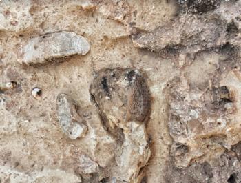 Identifying Sedimentary Rocks