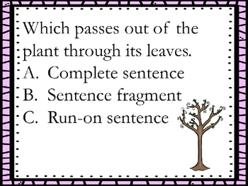 Identifying Sentence Types: Complete, Run-On, and Fragment