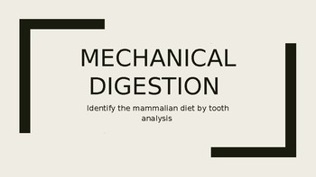 Mechanical Digestion Activity