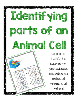 Identifying parts of an Animal Cell