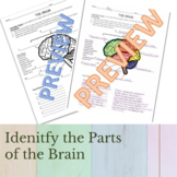 Identifying the major parts of THE BRAIN and their functions
