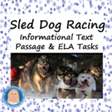 Sled Dog Racing Informational Text Reading & Writing FREE - Distance Learning