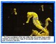 If You Were a Seahorse:  Informational Story & Seahorse Facts,