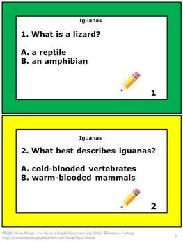 Iguanas Task Cards