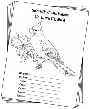 Illinois State Bird Notebooking Set (Northern Cardinal)