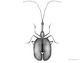 Illustrated Insect 3 Pack Clip Art