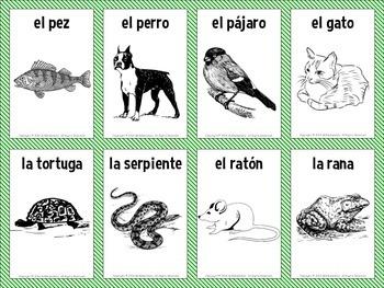 Spanish Animals Vocabulary Flashcards