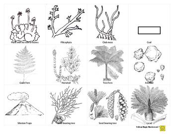Illustrations for Plant Timeline