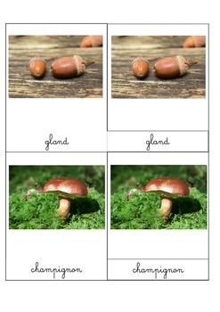 """Images classifiées """"L'automne"""""""