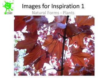 Images for Inspiration - Natural forms - Plants