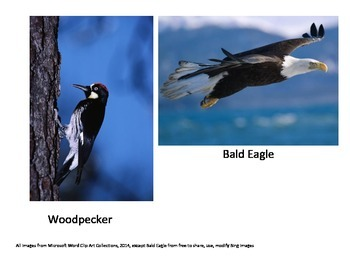 Images of Birds
