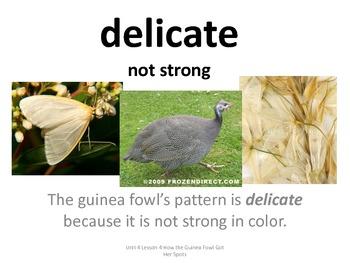 Imagine It U 4 L 4 How the Guinea Fowl Got Her Spots Picture Vocab Cards