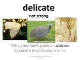 Imagine It U 4 L 4 How the Guinea Fowl Got Her Spots Pictu