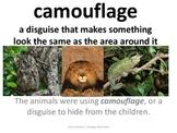 Imagine It Unit 4 Lesson 1 Animal Camoflauge Picture Vocabulary Cards