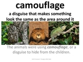 Imagine It Unit 4 Lesson 1 Animal Camoflauge Picture Vocab