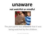 Imagine It Unit 4 Lesson 5 I See Animals Hiding Picture Vo