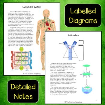 Immune Lymphatic System Interactive Notebook