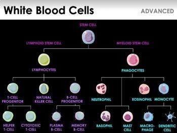 Immune System - Lines of Defense, Immune Cells, Immunity, Vaccines (ADVANCED)